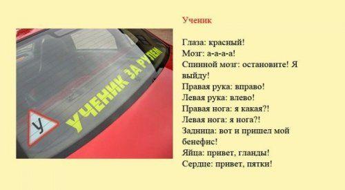 Разновидности водителей и их поведение на дороге - фото 4