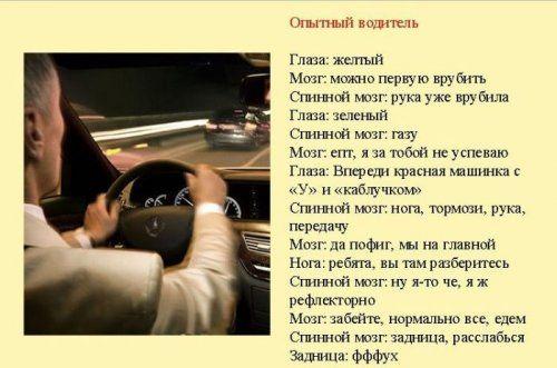 Разновидности водителей и их поведение на дороге - фото 1