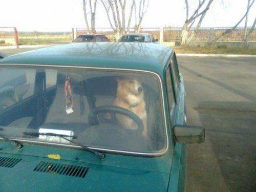 Подборка автомобильных приколов прошедшего года - фото 89