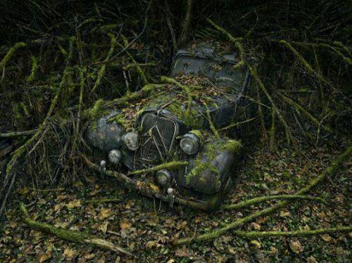 Брошенные автомобили в объятиях природы - фото 5