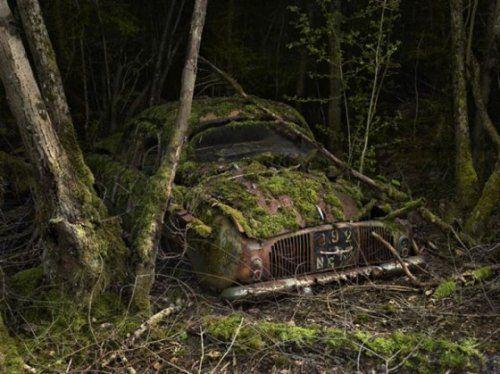 Брошенные автомобили в объятиях природы - фото 12