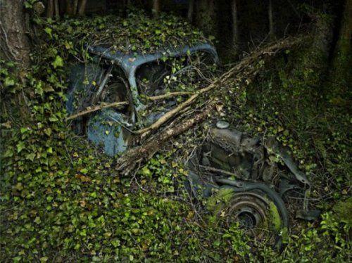 Брошенные автомобили в объятиях природы - фото 7