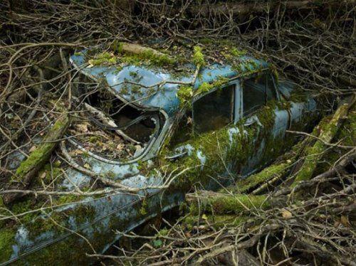 Брошенные автомобили в объятиях природы - фото 4