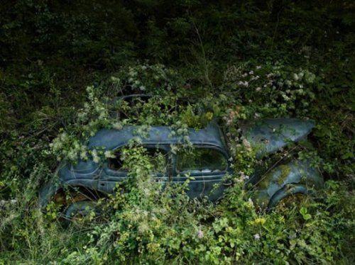 Брошенные автомобили в объятиях природы - фото 3