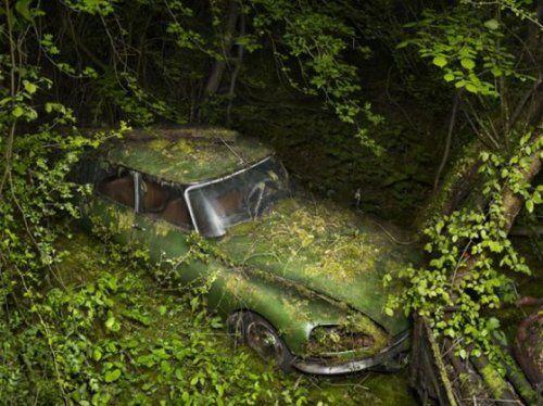 Брошенные автомобили в объятиях природы - фото 1