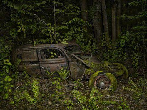Брошенные автомобили в объятиях природы - фото 8