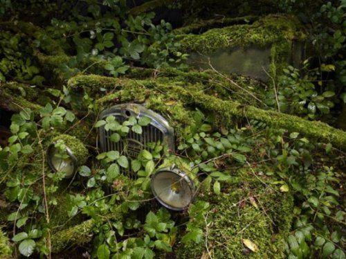 Брошенные автомобили в объятиях природы - фото 10